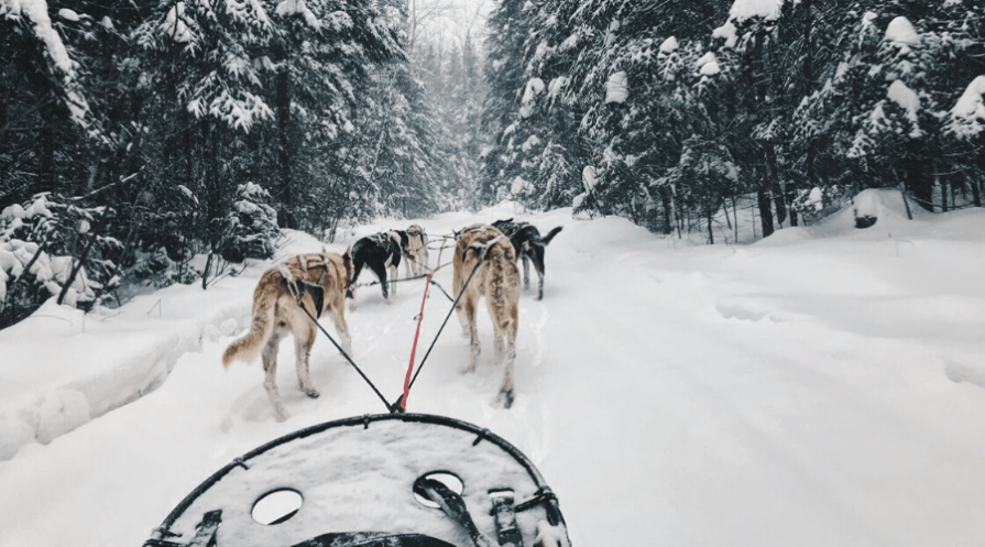 types of sleds wide featured dogs pulling sled POV through snowy woods