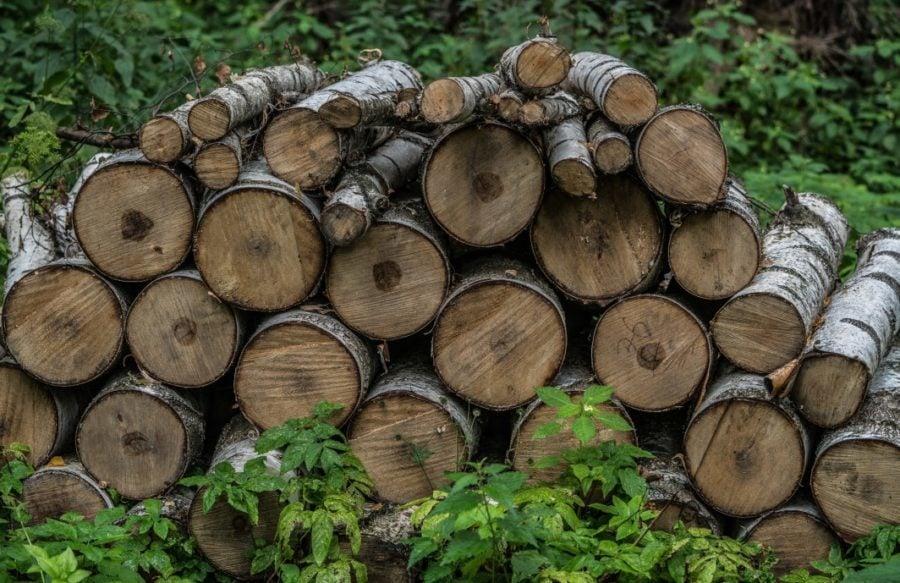 oak firewood seasining stacked outdoors green hardwood with bark and no splits