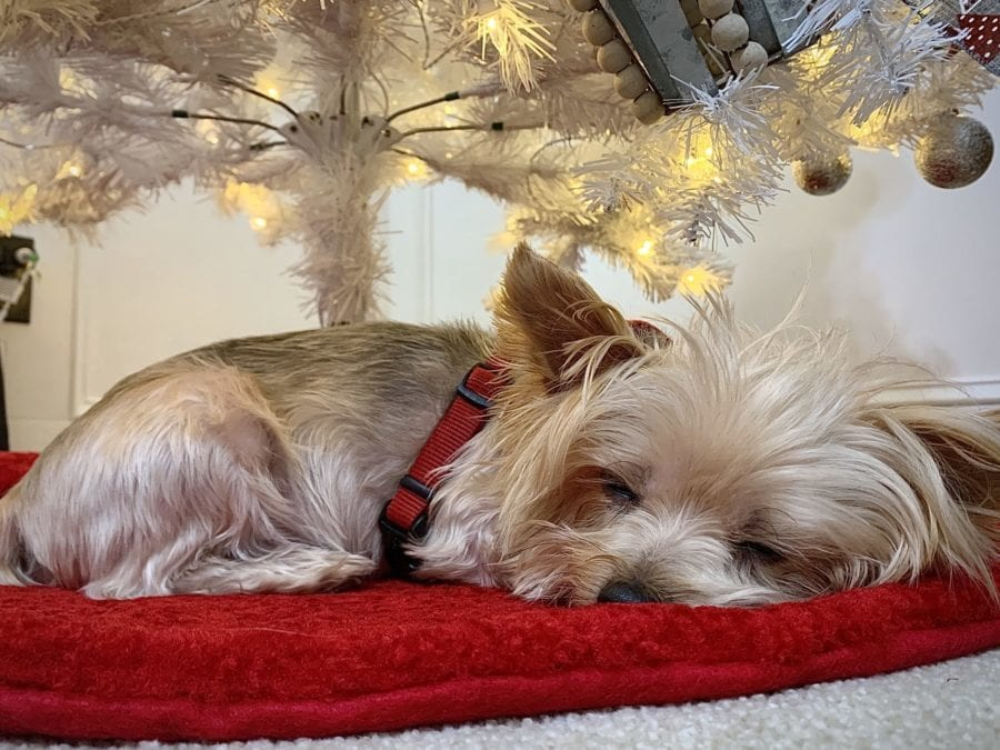 unique tree skirts ideas with small sleeping dog pet tax