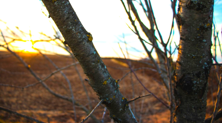 an almond tree outdoors closeup bark texture