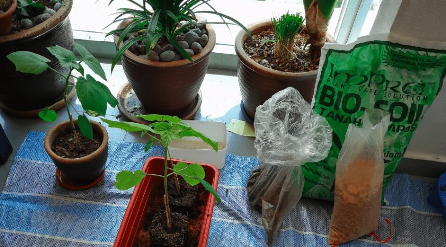 grow vegetables in winter fertilizer