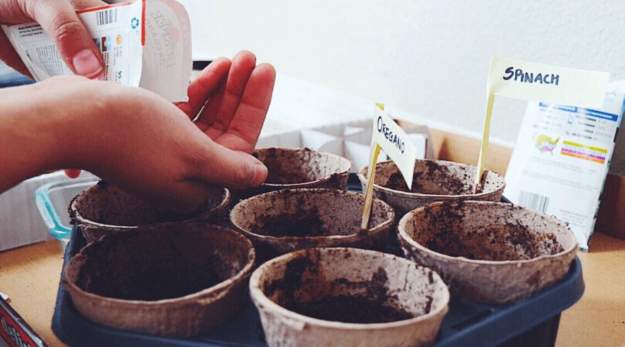 grow vegetables in winter germinate seeds indoors in ecopots for winter gardens