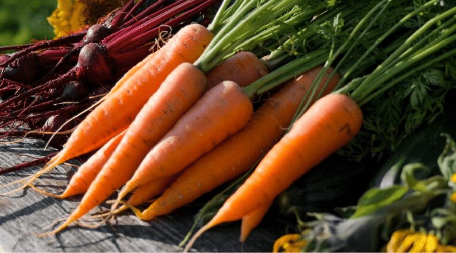 grow vegetables in winter harvest