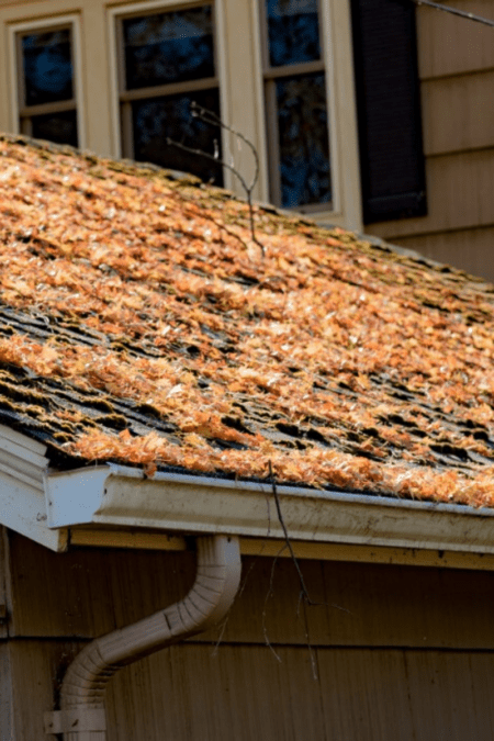 Fallen Autumn leaves on the roof of a home with rain gutters no guard