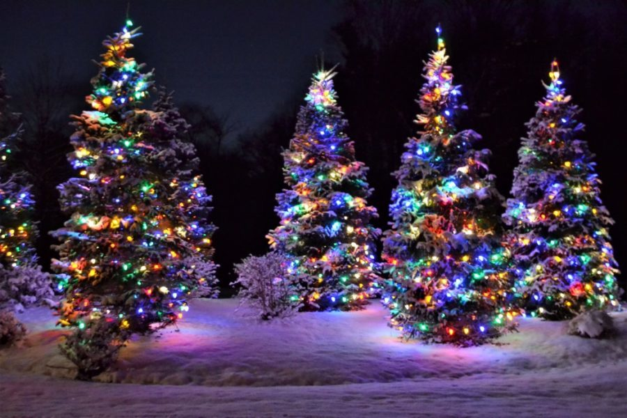 outdoor christmas trees in snow with colorful lights at night