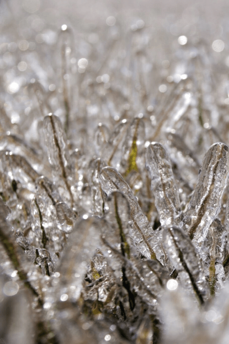icy grass closeup vertical