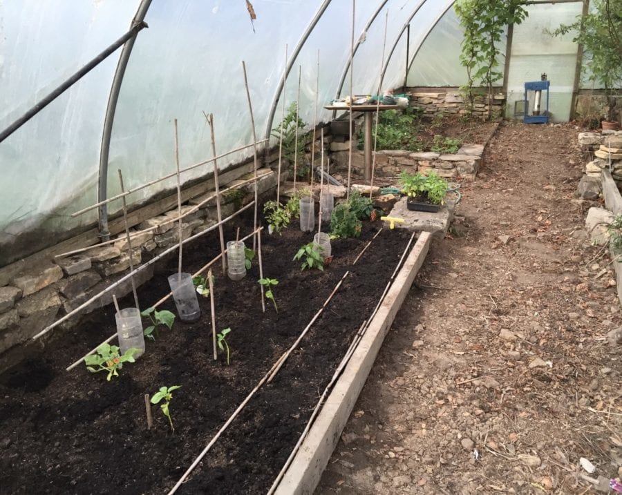 Polytunnel gardening organic, vegetable, gardening, vegetable garden, polytunnel, organic gardening