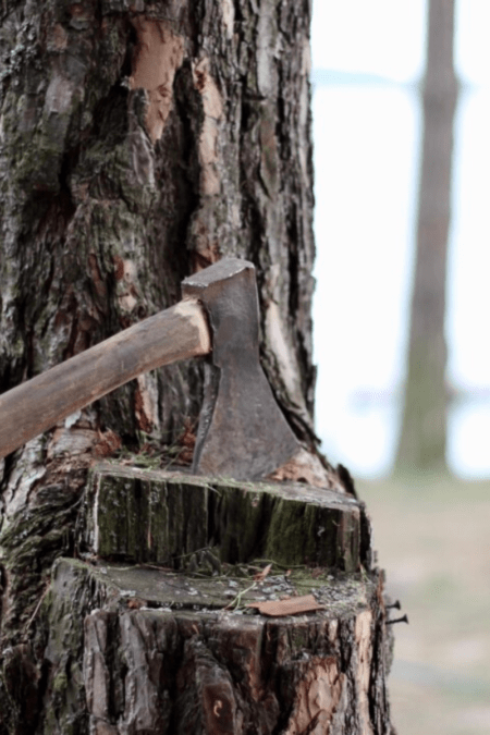 An ax in a tree with a partially split trunk used as a chopping block