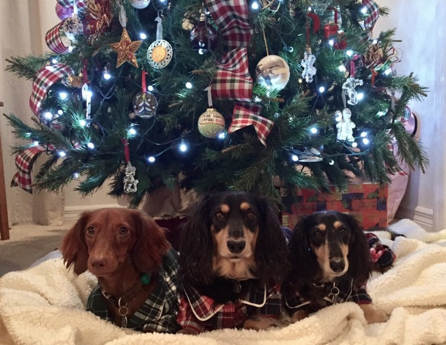 plaid christmas tree decoration ideas and pet tax