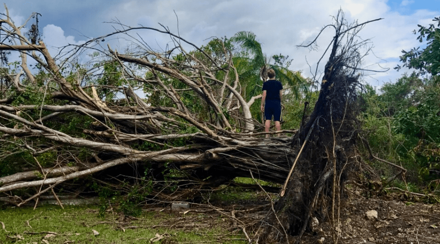 a boy stands on the trunk of a downed felled tree after a storm in florida