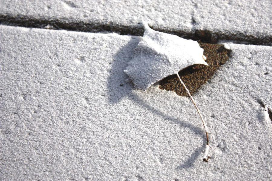 a leaf on a snowy concrete sidewalk