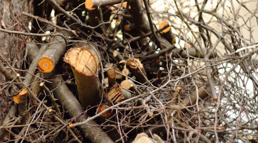 green ashwood outdoors freshly cut ash firewood