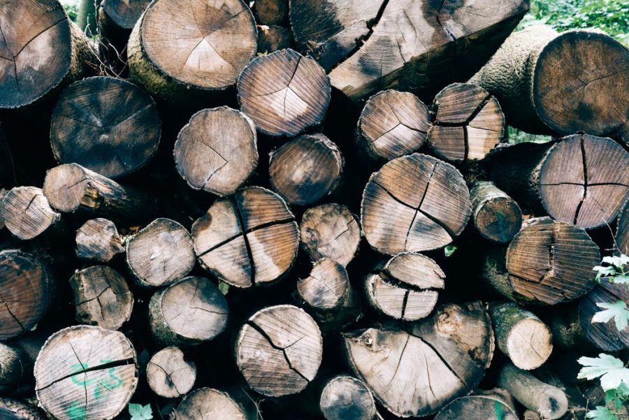 Full frame close up of a pile of cut tree trunks. European beech (Fagus sylvatica). Logs of trees in nature.