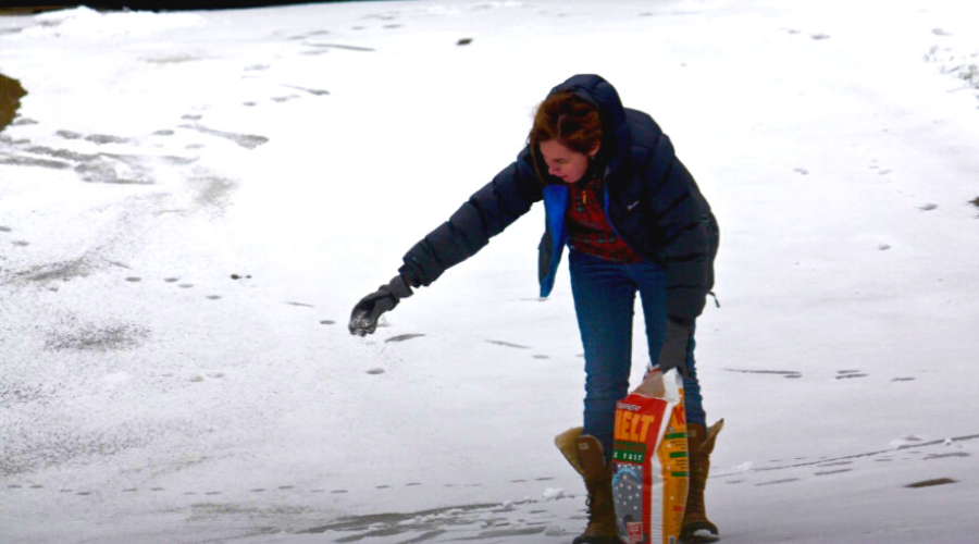 how to use ice melt best woman deicing sidewalks ice melt winter weather snow featured wide