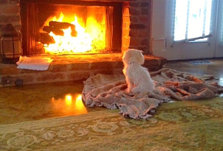 a small dog sits on a blanket in front of a wood fire indoors fireplace pet tax