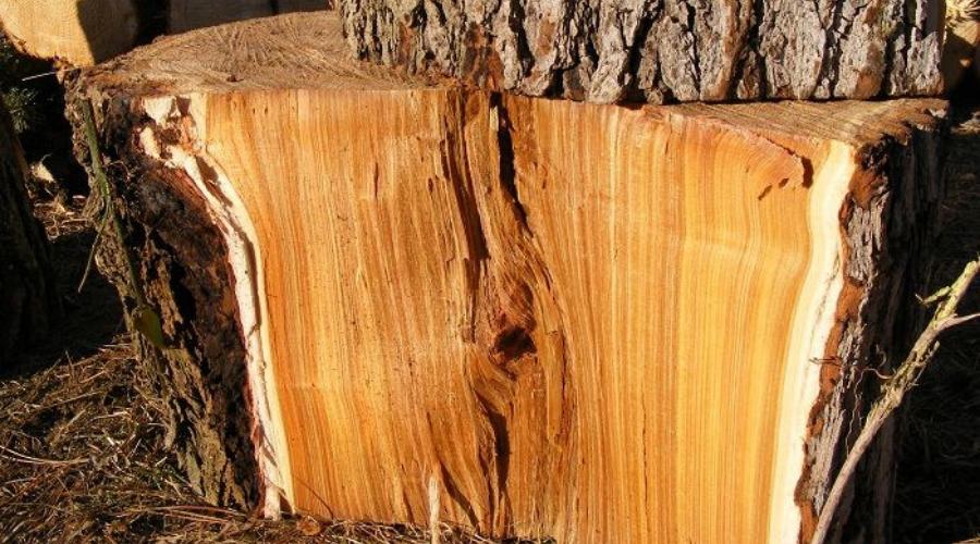 red elm split wood interior closeup