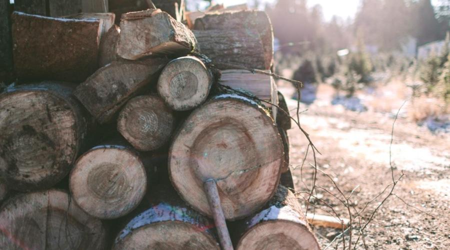 seasoning firewood outdoors whole logs unsplit firewood stack