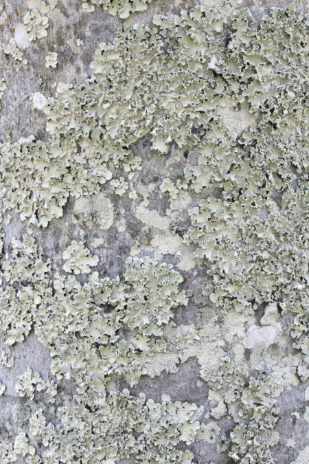 Moss, mold, fungus and lichen on the trunk of a palm tree