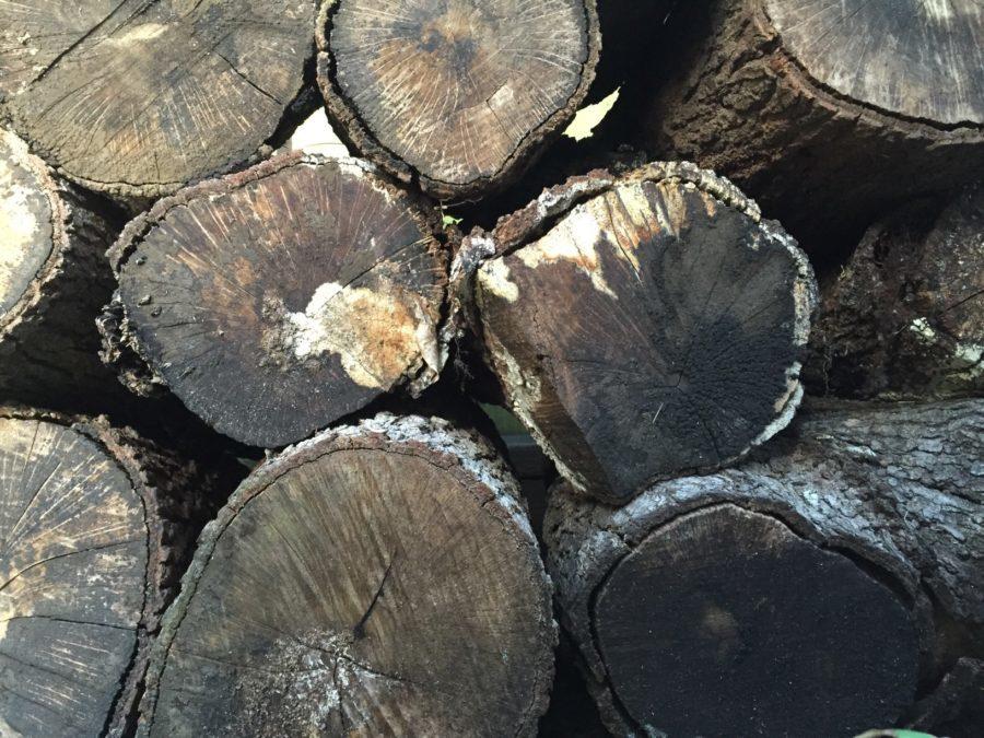 Wood pile brown, wood, mold, wood pile