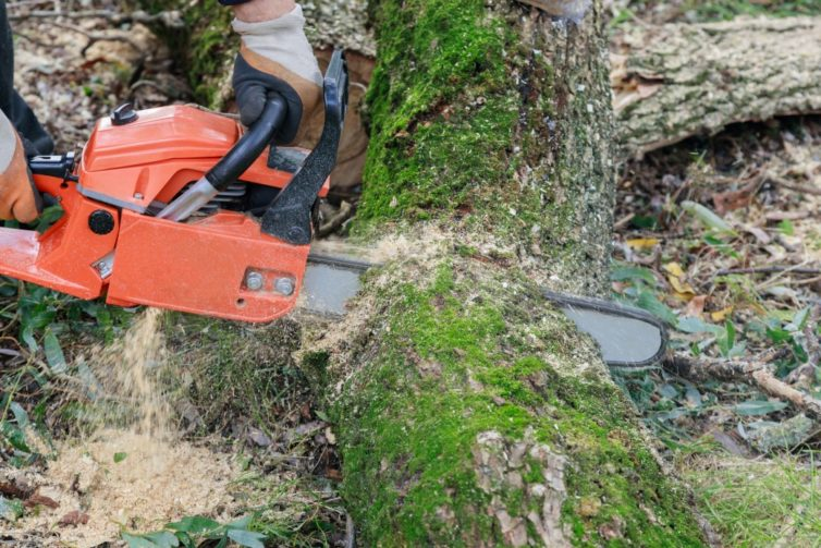 Tree felling with a large chainsaw cutting into tree trunk motion blur sawdust and chippings