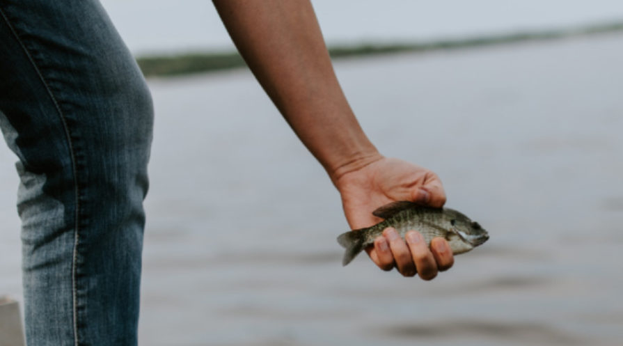 person holding small bluegill in hand on a dock