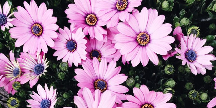 a bed with pink gerbera