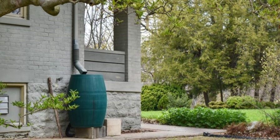 Green plastic rain catcher barrel to catch and store fresh chlorine-free water.