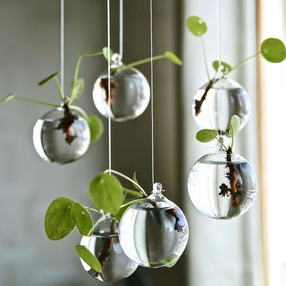 Ball-Shaped Hanging Propagation Station