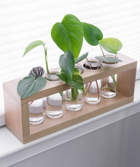 A DIY plant propagation station is a cute way to display plants while propagating them in water.