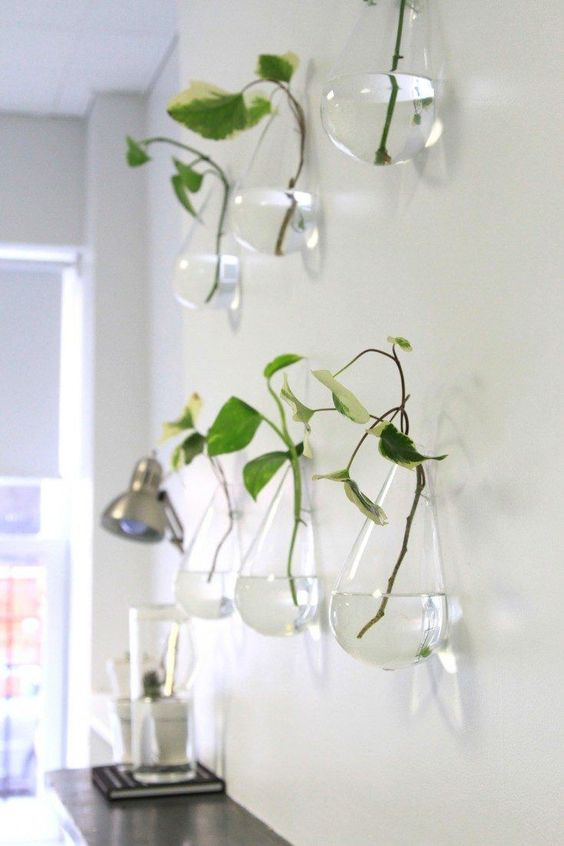 Wall-Mounted Teardrop Propagation Vases