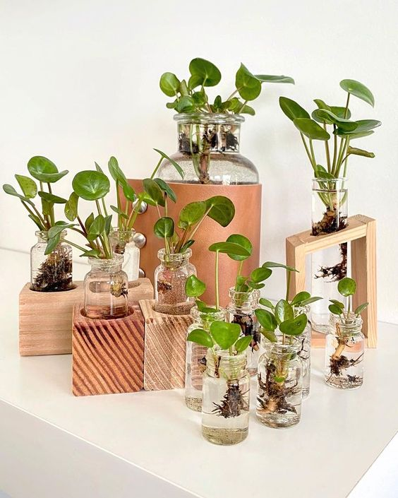 random glass jars that can be used a propagation stations
