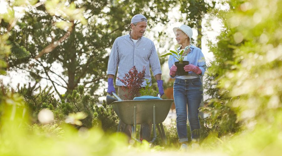 A happy senior couple, man pushing a garden cart, woman holding a potted plant.