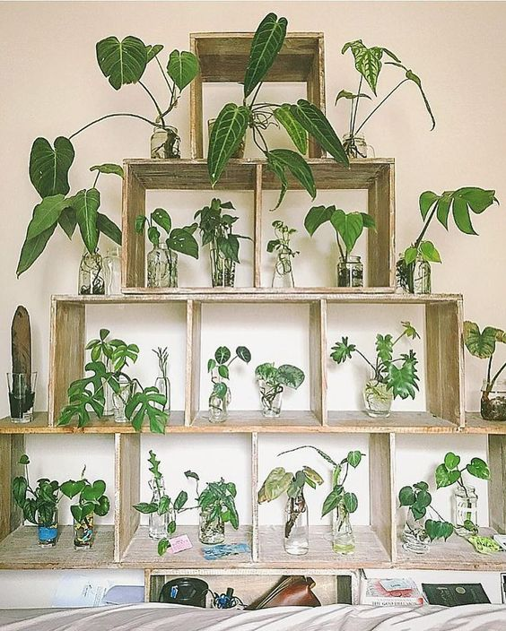 A large wall mount unit to display plants and work as a propagation station