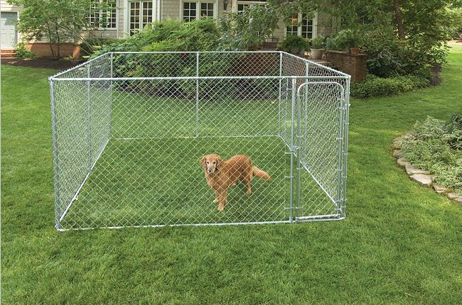 Dog standing inside a 2 In 1 Dog Kennel sitting on green grass.