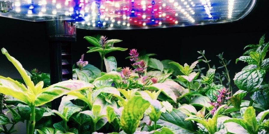 LED lights over Aerogarden full of plants