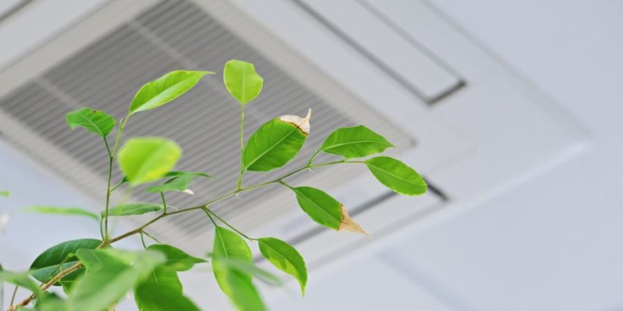 Air conditioning ceiling outlet with a Ficus branch in the foreground.