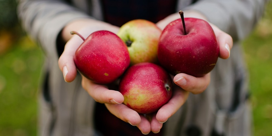 person holding four apples