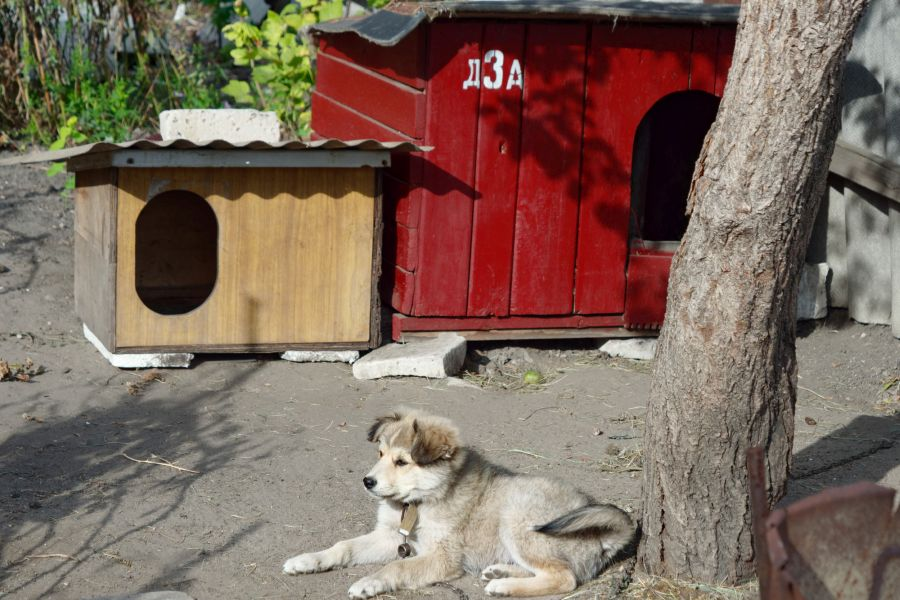 Puppy lying outside two DIY dog kennels.