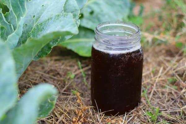 Jar Of Compost Tea