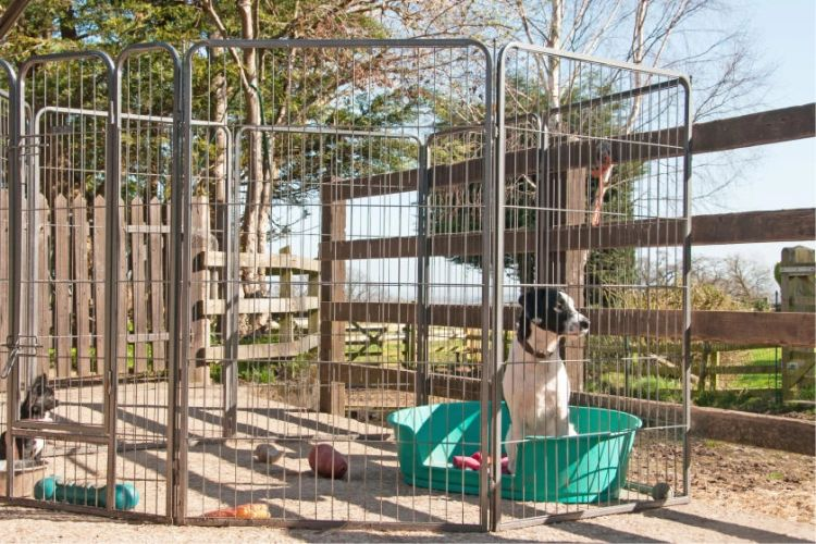 Dog sitting in a green tub inside the DIY Metal Outdoor Dog Kennel on someone's property.