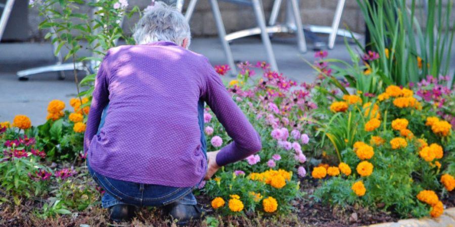 An elderly woman, crouched in between flowers, weeding.