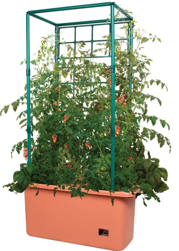 orange planter with tomatoes growing on trellis