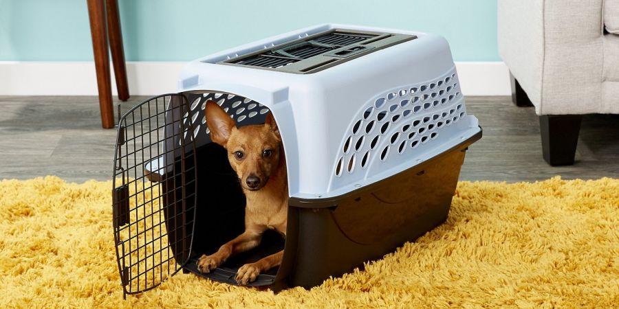 Dog laying inside Petmate Two Door Top Load Dog Kennel standing on mustard-colored carpet.