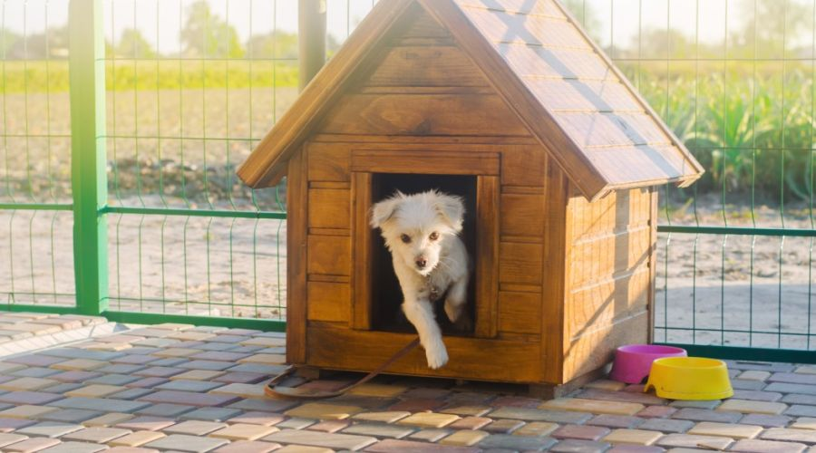 White puppy jumping out of its kennel.