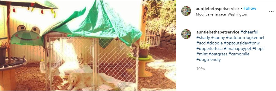Instagram post screenshot of the Shady Outdoor Kennel with two dogs inside.