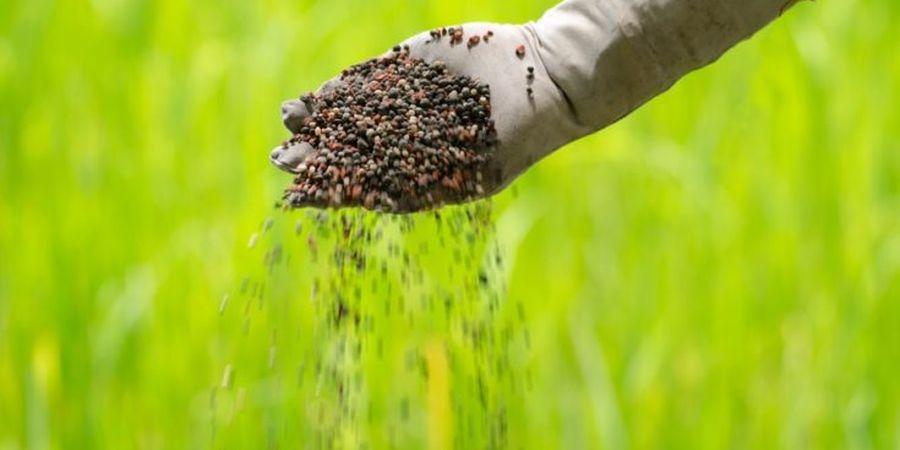 Gloved farmer's hand manually spreading grass fertilizer.