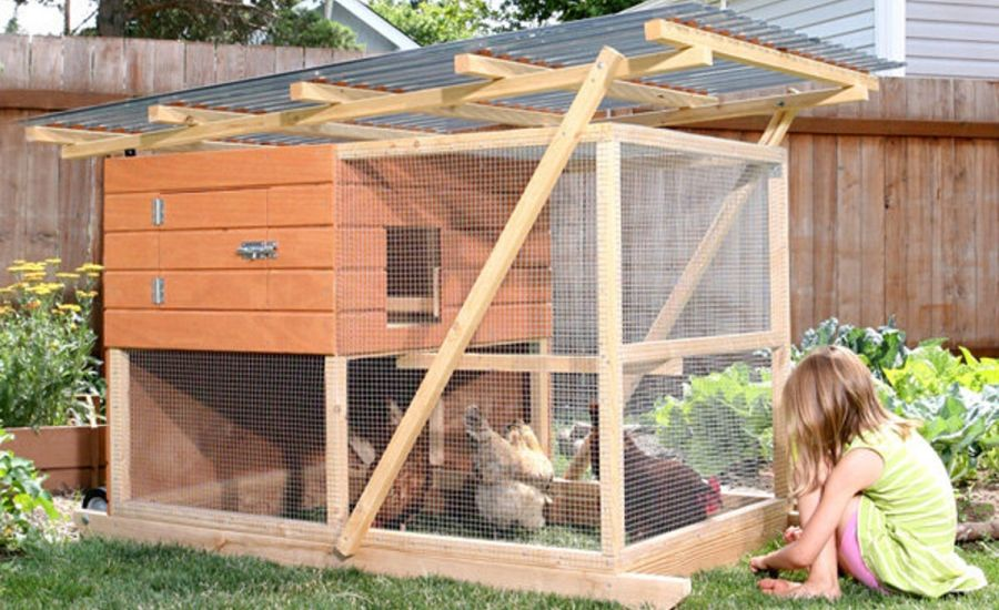 Little girl sitting outside mobile chicken coop, with three chicken inside, picking grass