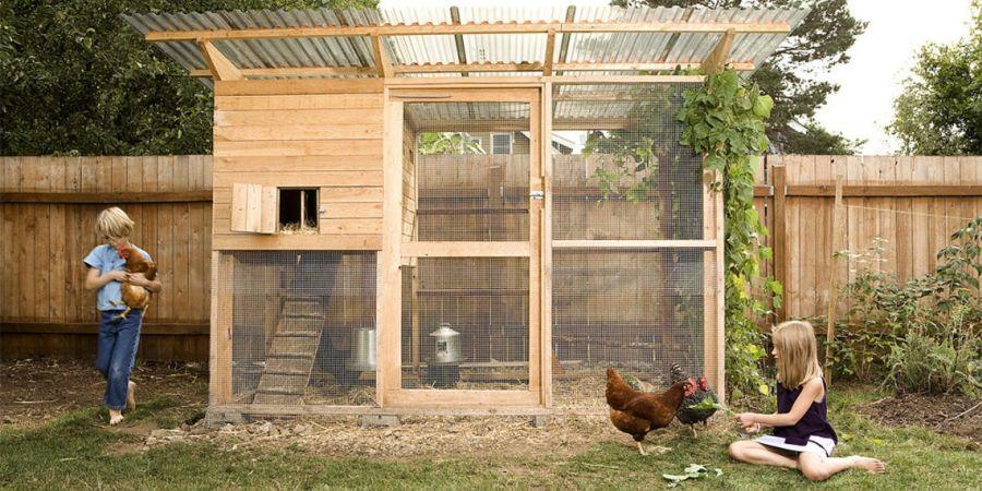 Walk In Backyard Chicken Coop