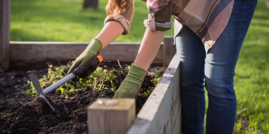 Woman using a hand weeding tool to weed her raised garden bed.