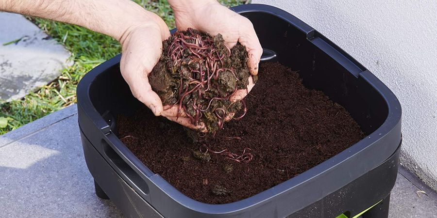 A pair of male hands holding soil with worms over a worm composting bin.